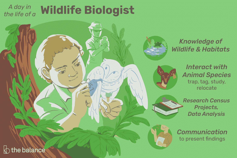 wildlife-biologist-job-responsibilities